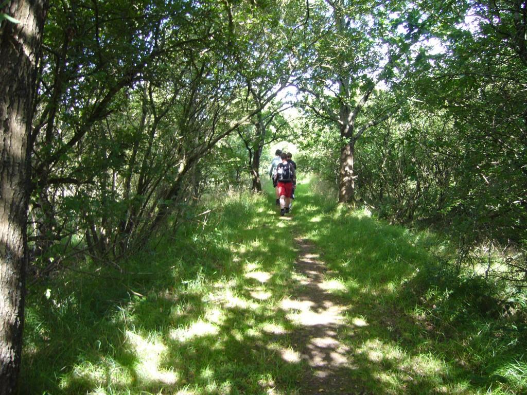 Vandring i skov